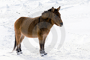 Wild Burro In The Winter Stock Photo - Image: 18111860