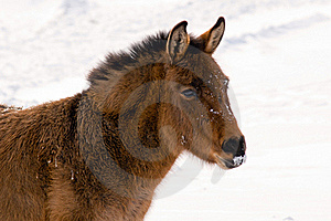 Wild Burro In The Winter Stock Images - Image: 18111884