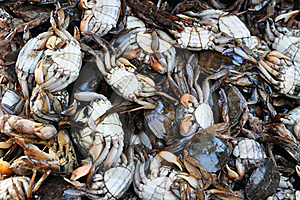 Salty Crab Royalty Free Stock Photo - Image: 18119205