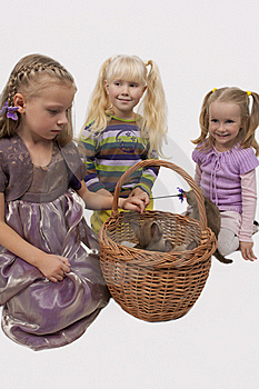 Three Little Girls And Three Small Cats Royalty Free Stock Photography - Image: 18157877