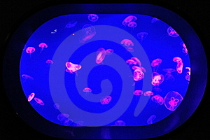 Group Of Jellyfish Royalty Free Stock Images - Image: 18173659