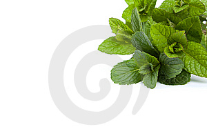 Mint Leaf Royalty Free Stock Photos - Image: 18196398