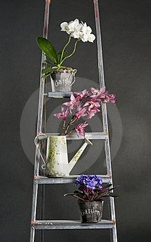 Beautiful Garden Flowers On Metal Stepladder Stock Photos - Image: 18197293