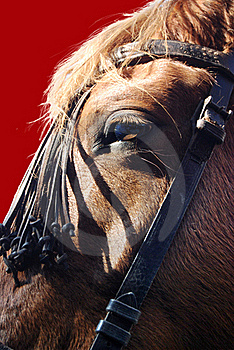 Horse Eye Royalty Free Stock Images - Image: 18197659