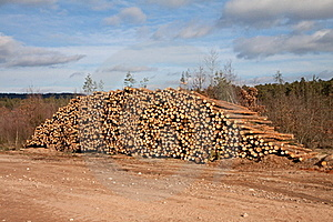 Pile Of Trunks Royalty Free Stock Photo - Image: 18220765
