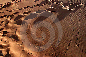 Animal Tracks In The Sand Royalty Free Stock Photography - Image: 18228847