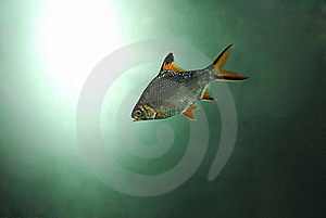 Underwater Fish Royalty Free Stock Image - Image: 18229926