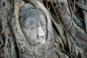 Head Of Ancient Buddha In Tree Royalty Free Stock Image - Image: 18235906