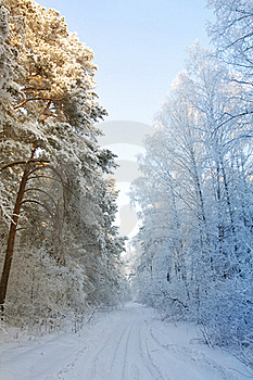 Winter Snow Forest - The Beginning Of Spring Stock Image - Image: 18238781