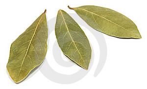 Bay Leaves Royalty Free Stock Images - Image: 18240129
