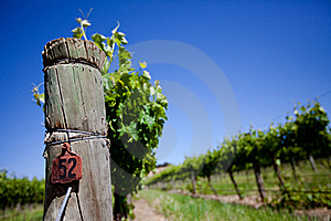 Fresh Vines Royalty Free Stock Photography - Image: 18248037