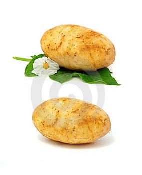 New Potatoes Royalty Free Stock Photos - Image: 18248868