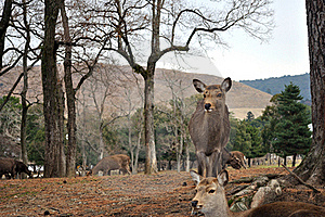 Wild Deer In A Park Royalty Free Stock Photos - Image: 18256028