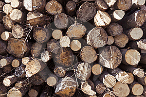 Stack Of Logs Royalty Free Stock Photo - Image: 18263185