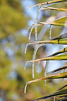 Palm Leaf Icicles Stock Photo - Image: 18264350