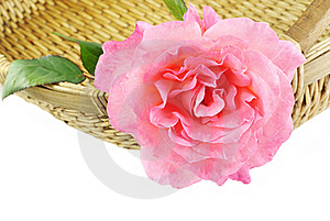 Rose In A Basket Stock Images - Image: 18264574