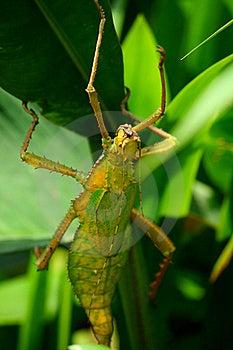 Insekta Liść Zdjęcia Royalty Free - Obraz: 18264888