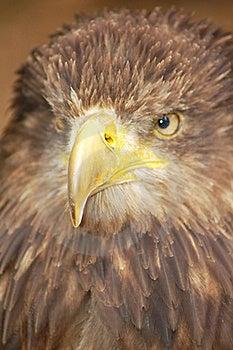 Predador Fotografia de Stock Royalty Free - Imagem: 18297157