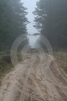 Forest Lane Royalty Free Stock Image - Image: 1837646