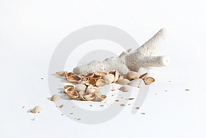 Coral And Nuts Stock Photography - Image: 1839582