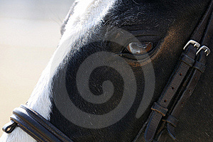 Horse Closeup Stock Photos - Image: 18307933