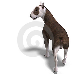 Bull Terrier Dog Royalty Free Stock Photo - Image: 18315025