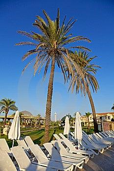 Palm Trees Stock Image - Image: 18321961