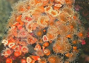 Orange Sea Urchins Stock Image - Image: 18324121