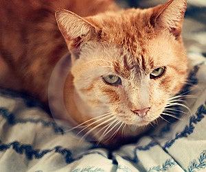 Orange Cat On A Blue Blanket Royalty Free Stock Photos - Image: 18333638