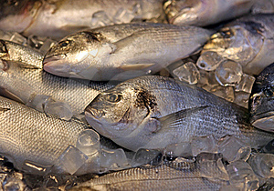 Fresh Fish On Ice On The Market Royalty Free Stock Photography - Image: 18334557