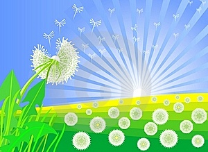 Vector Dandelions Against The Backdrop Of Sunrise Stock Photography - Image: 18338192