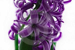 Spring Flower Stock Image - Image: 18359991