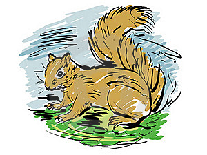 Squirrel Royalty Free Stock Photos - Image: 18363008