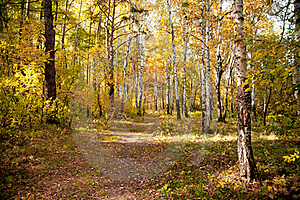 Autumn Wood Royalty Free Stock Photography - Image: 18378337