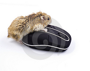 Hamster3 Royalty Free Stock Photo - Image: 18379205