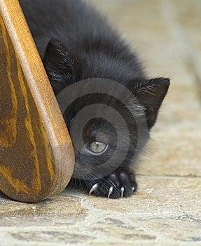 Cat Lurking Around The Corner Stock Photo - Image: 18381200