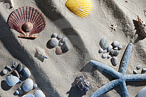 Seashell Composition Royalty Free Stock Images - Image: 18386129