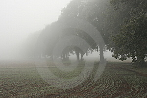 Alley And Field In The Mist Royalty Free Stock Image - Image: 18390346