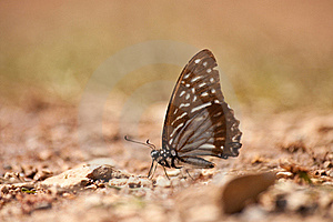 Butterfly Royalty Free Stock Images - Image: 18390739