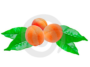 Apricot Stock Photo - Image: 18394820