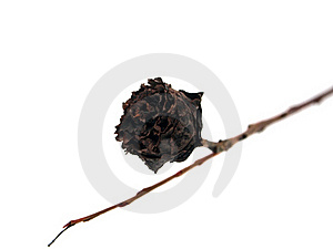 Dry Flower Stock Photos - Image: 18395003