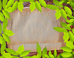 Vintage Paper On Green Leave Frame Royalty Free Stock Photos - Image: 18402658