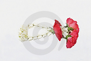 Jasmine Thai Garland Isolate, Malai Flower Royalty Free Stock Images - Image: 18407809