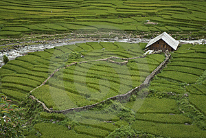 Rice Paddies Stock Photo - Image: 18417220