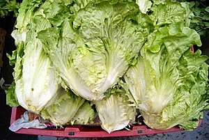 Lettuce Stock Photos - Image: 18422763