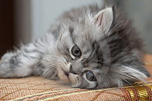Sad Kitty Stock Photo - Image: 18423160