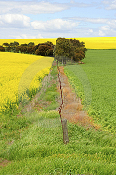 Canola Field III Royalty Free Stock Photo - Image: 18438675