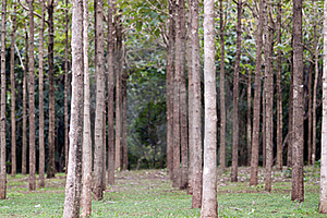Hardwood Trees In A Row Stock Photos - Image: 18448473