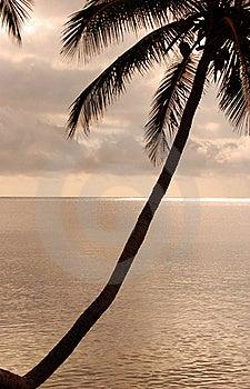Diagonal Palm Tree Royalty Free Stock Photos - Image: 18448628