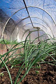 Real Greenhouse Stock Photo - Image: 18449710